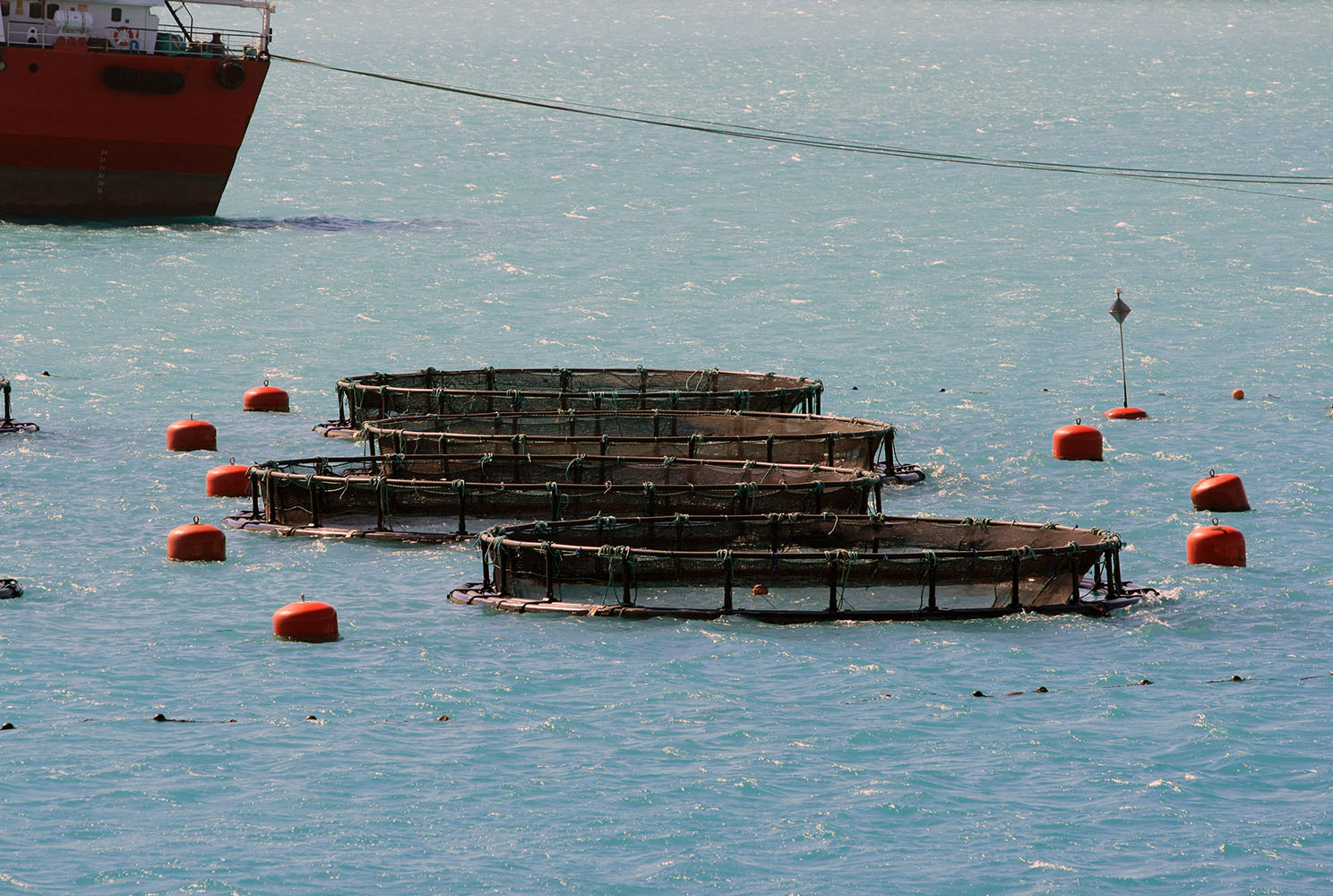 aquaculture-pick-up-marker-buoy-boei