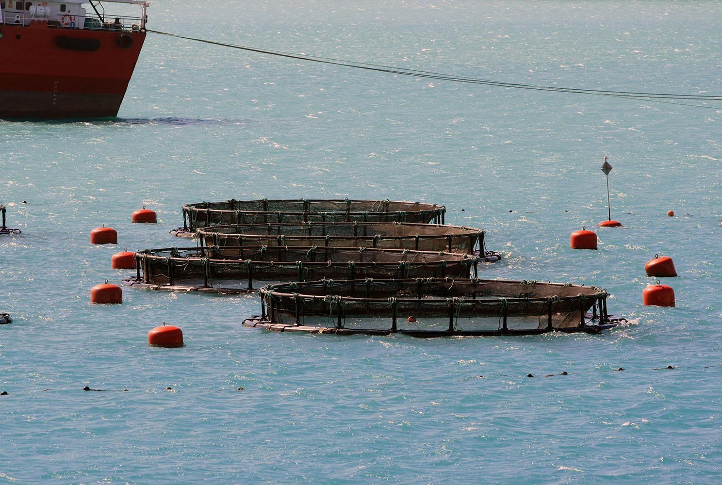 aquaculture-pick-up-marker-buoy-boei